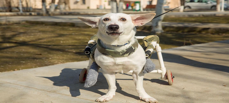 Судьба пса по имени Белый, или рассказ о людях, творящих добро