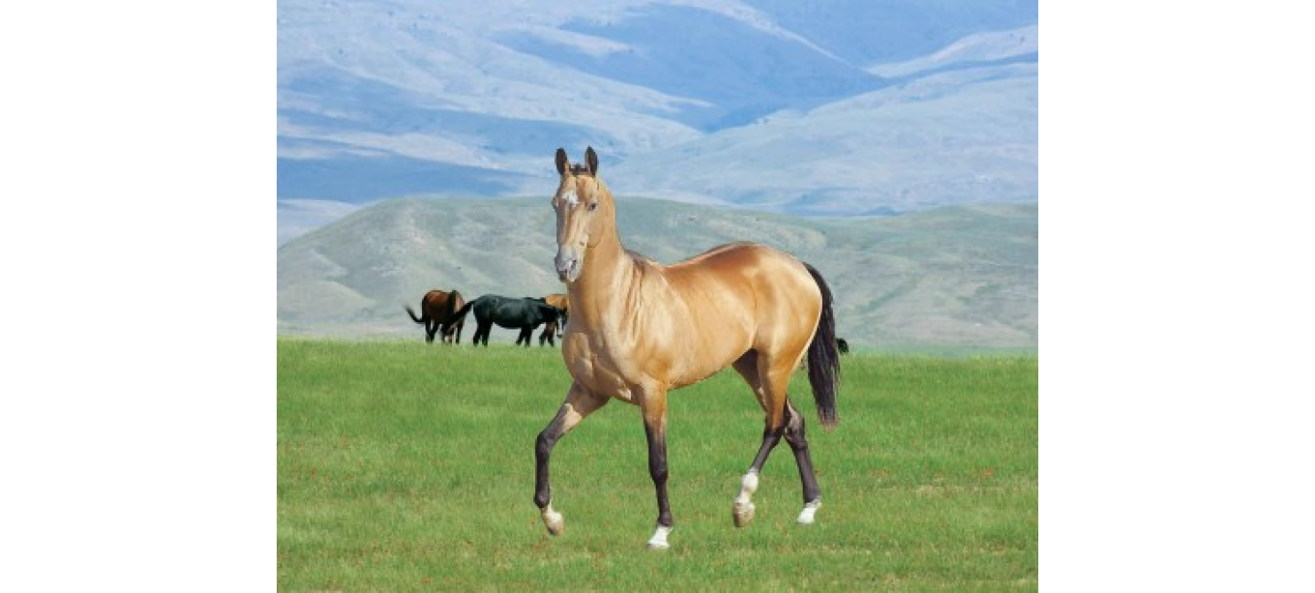 PLANNED EVENTS DEDICATED TO THE HOLIDAY OF THE TURKMEN HORSE